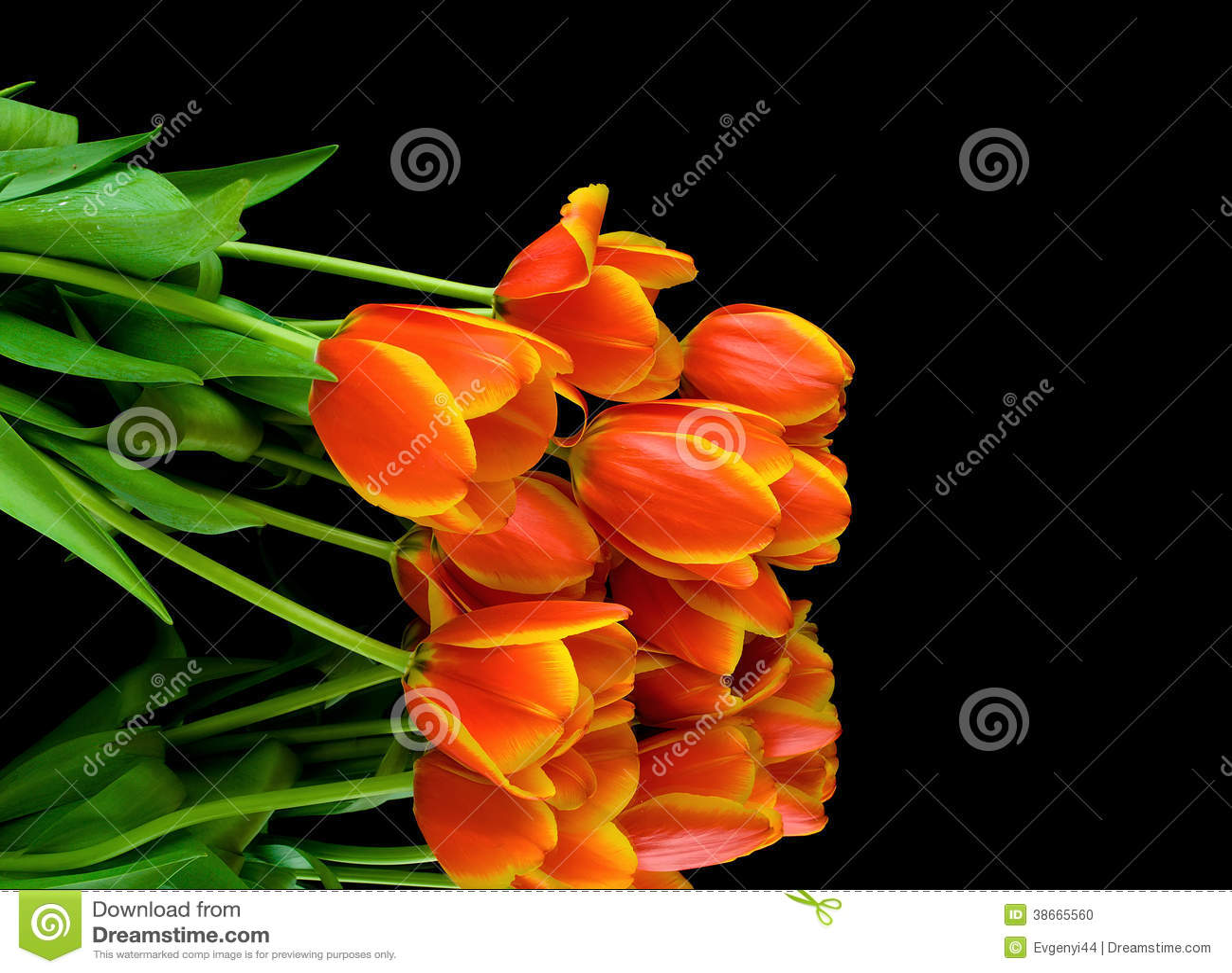 tulpen achtergrond met een - photo #29