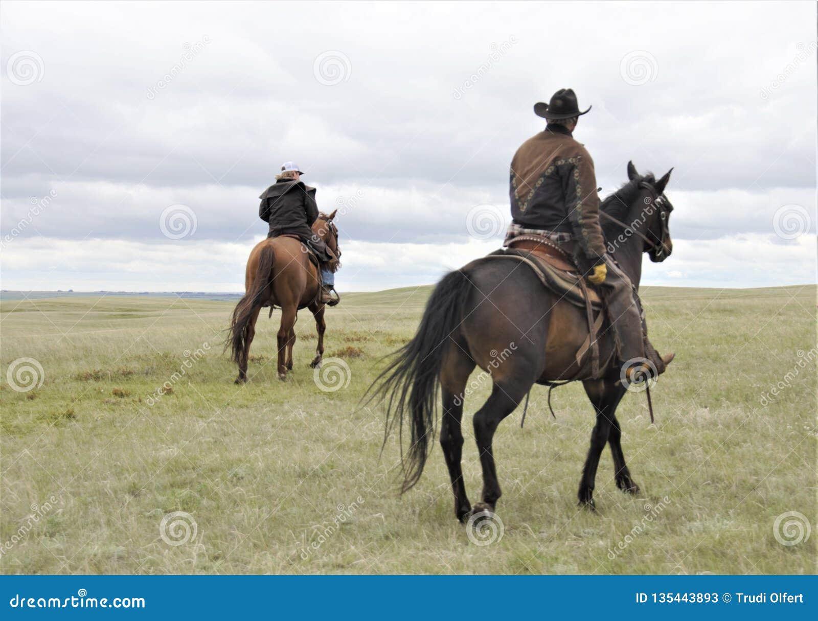 Boerderijpaarden met ruiters in weiland