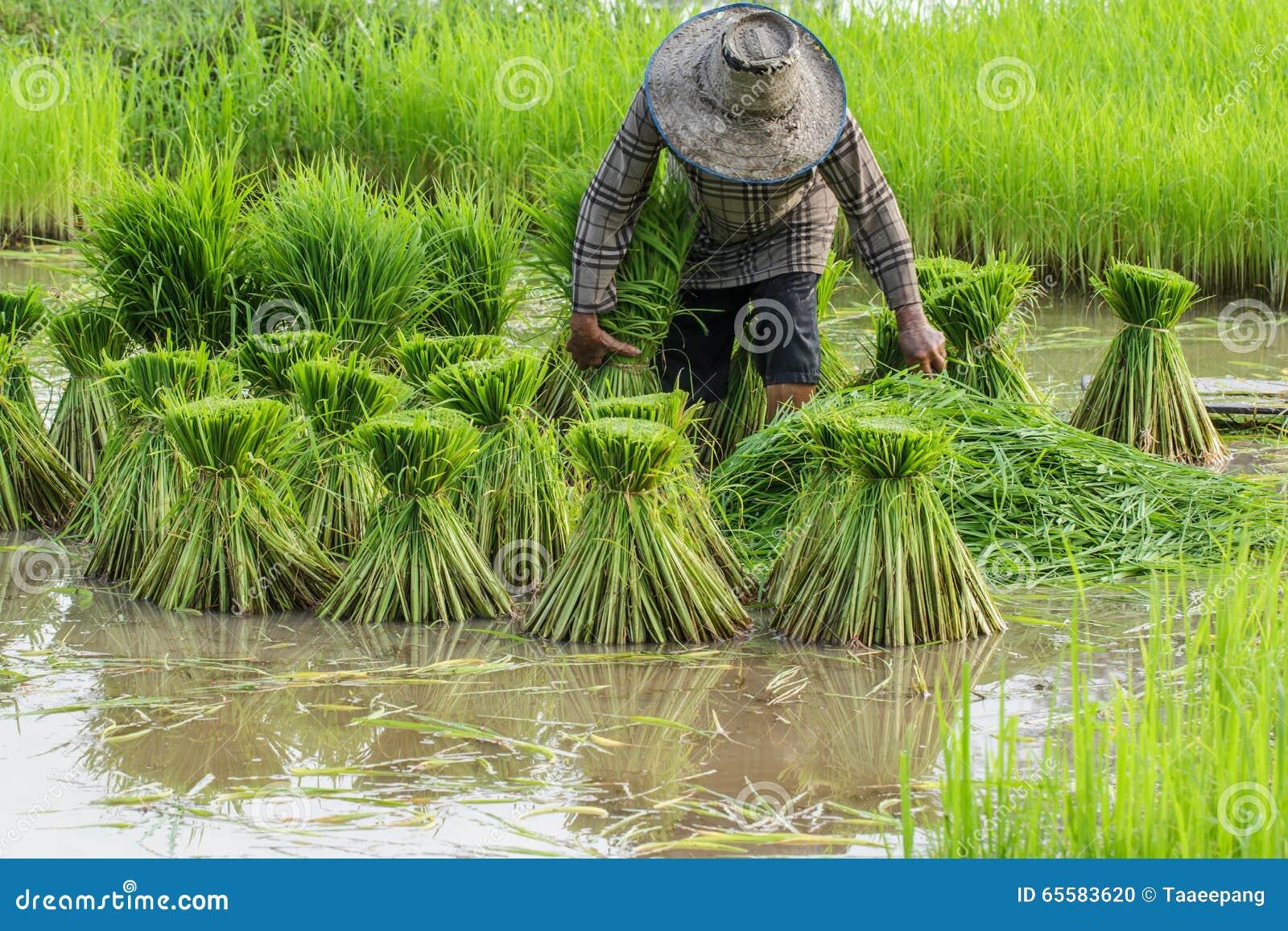 Boerenstand, Landbouwers