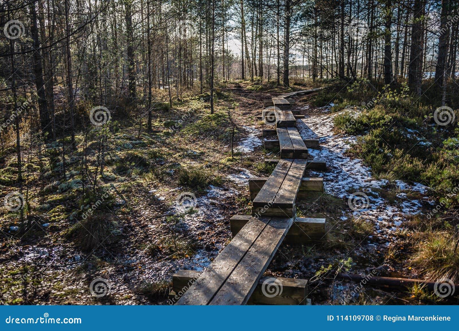 Bog boardwalk is a popular tourist destination in Lahemaa National Park. Estonia. Early springs.