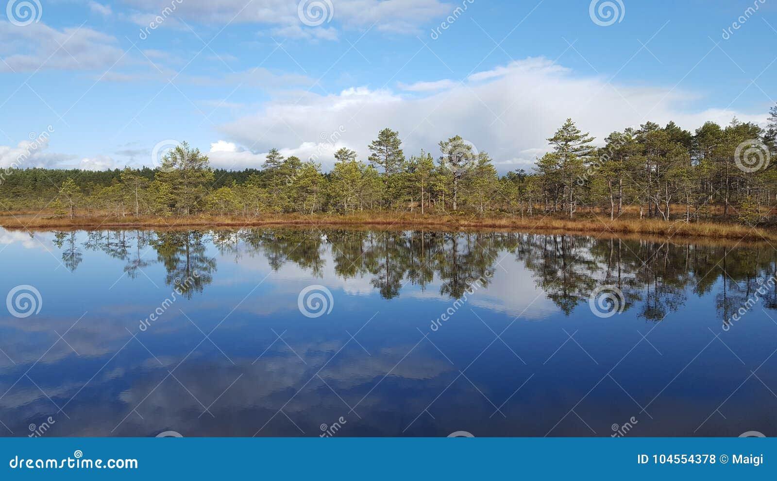 Download Bog lake stock photo. Image of nature, water, reflection - 104554378