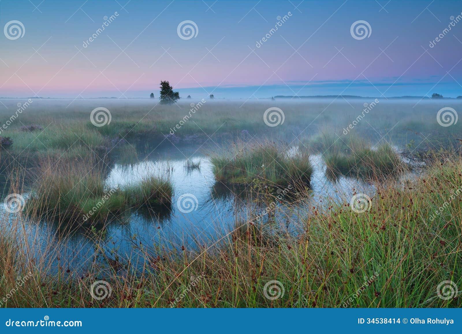Bog during summer sunrise