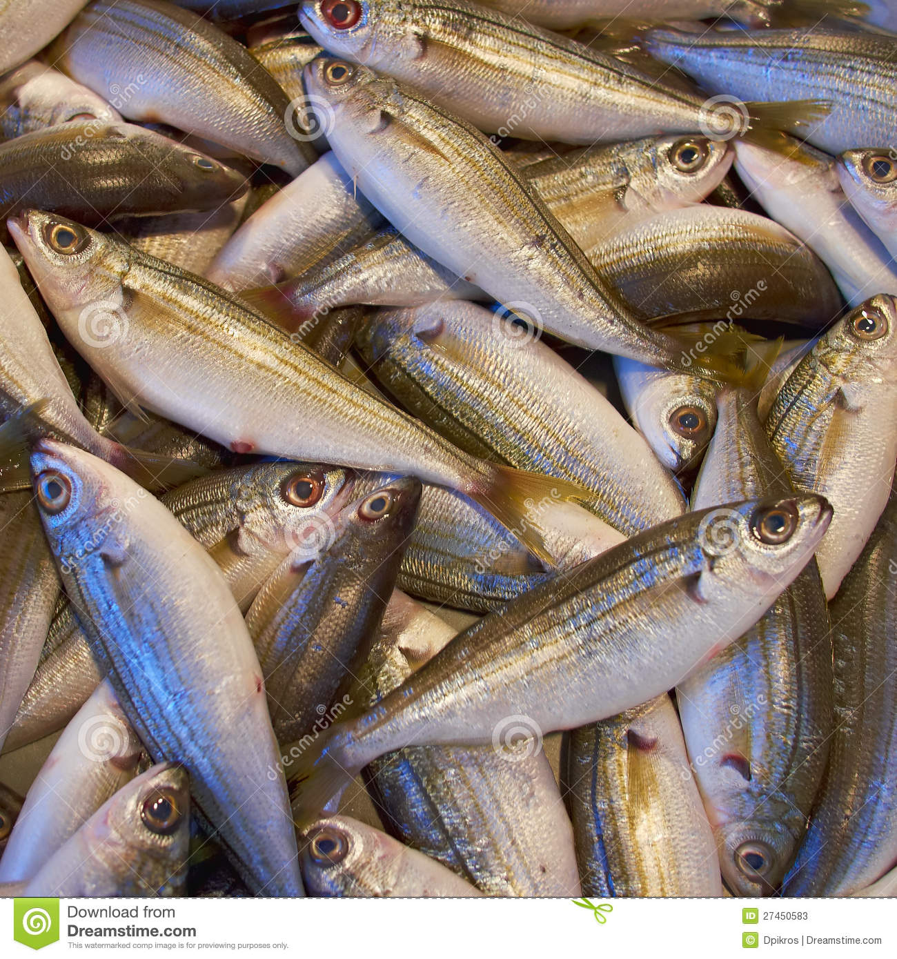 Bogue fish catch for sale stock photos image 27450583 for Stock fish for sale