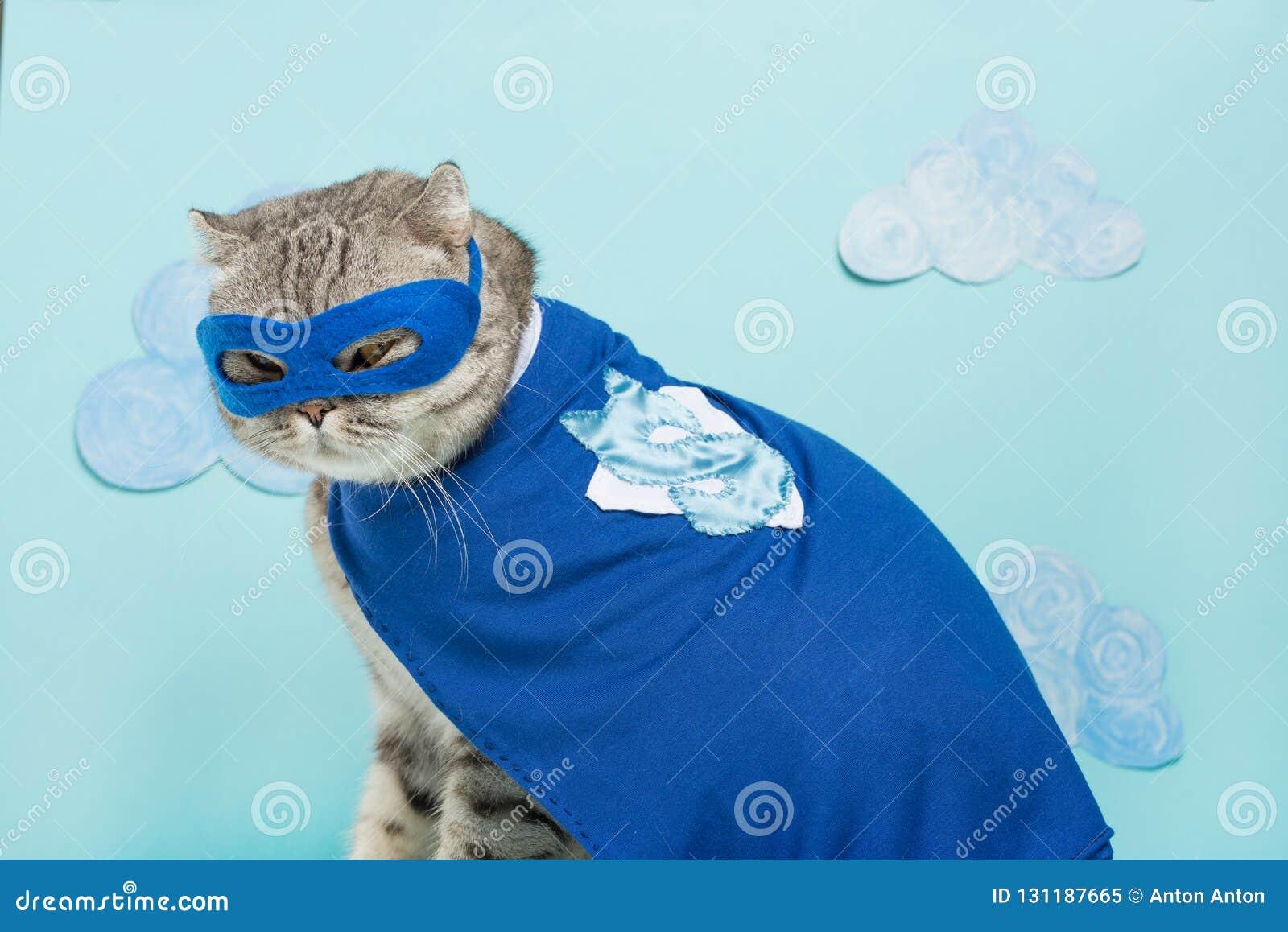 Bohatera kot, Szkocki Whiskas z błękitną maską i peleryną Pojęcie bohater, super kot, lider
