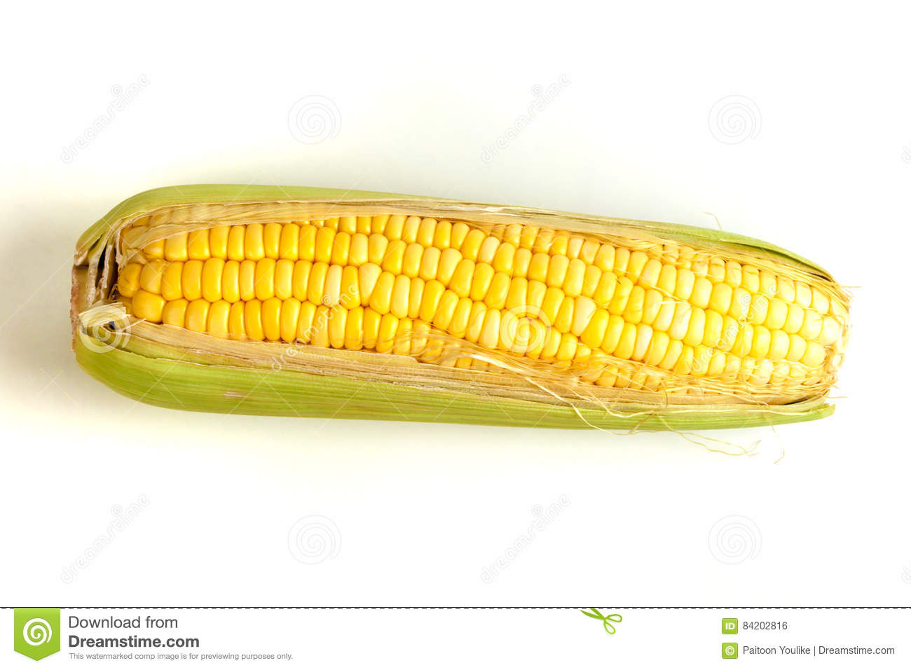 Boil Sweet corn stock photo  Image of growing, corn, farm