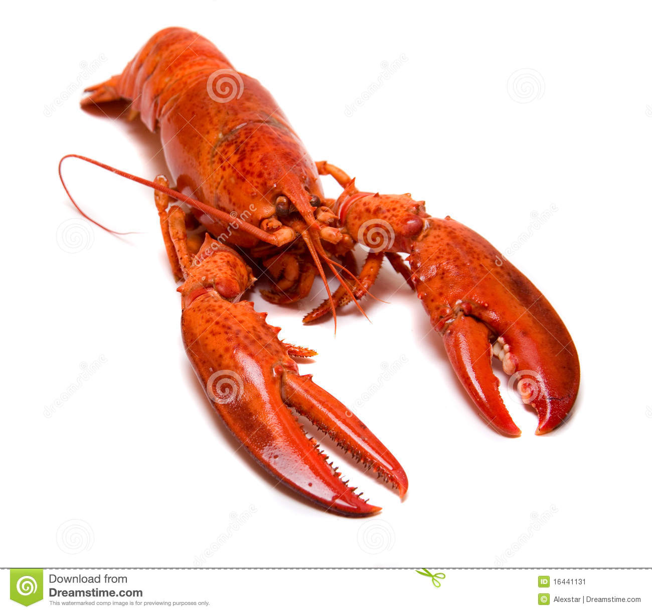 Boiled Lobster Stock Image - Image: 16441131