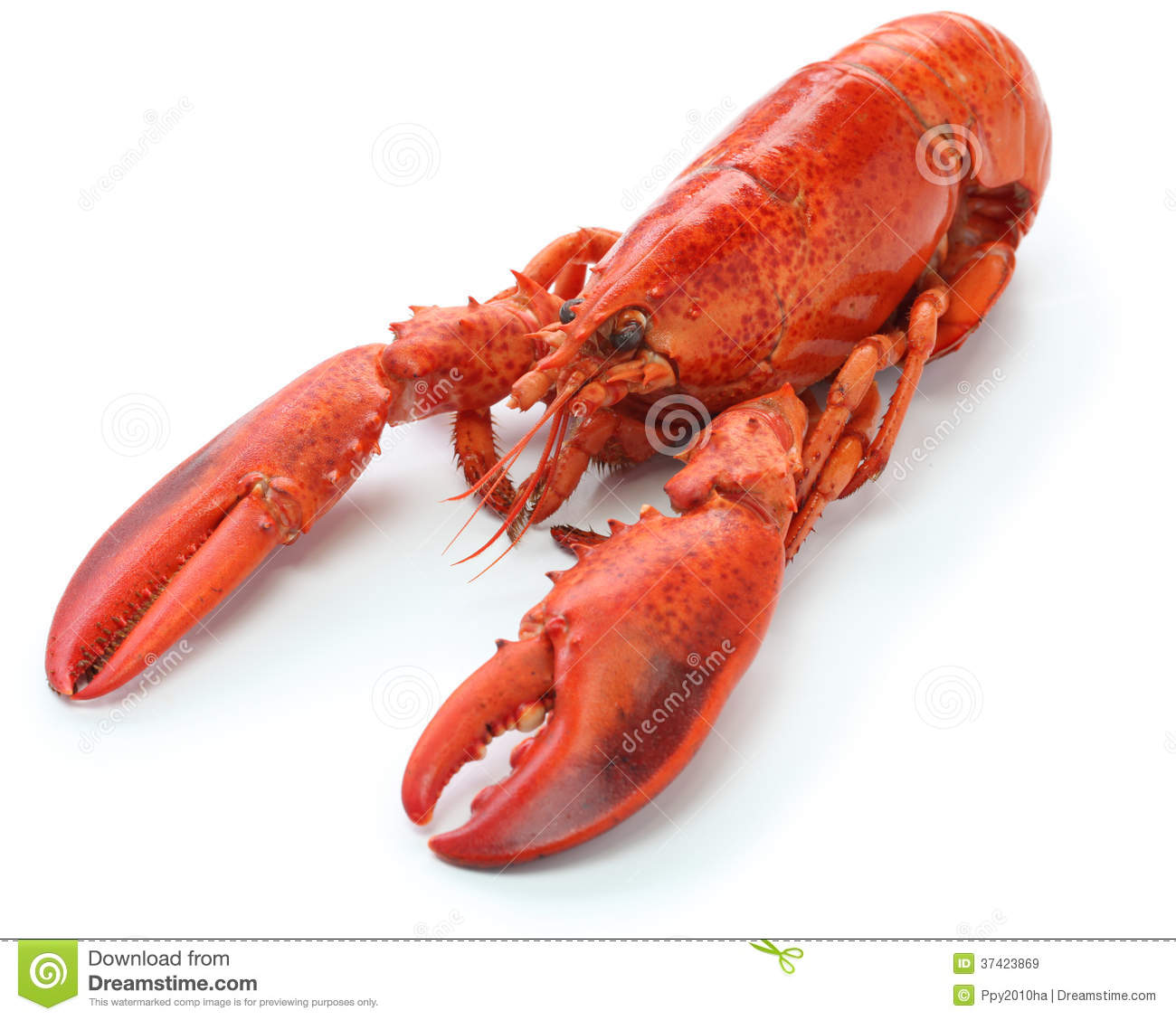 Boiled Lobster Royalty Free Stock Images - Image: 37423869