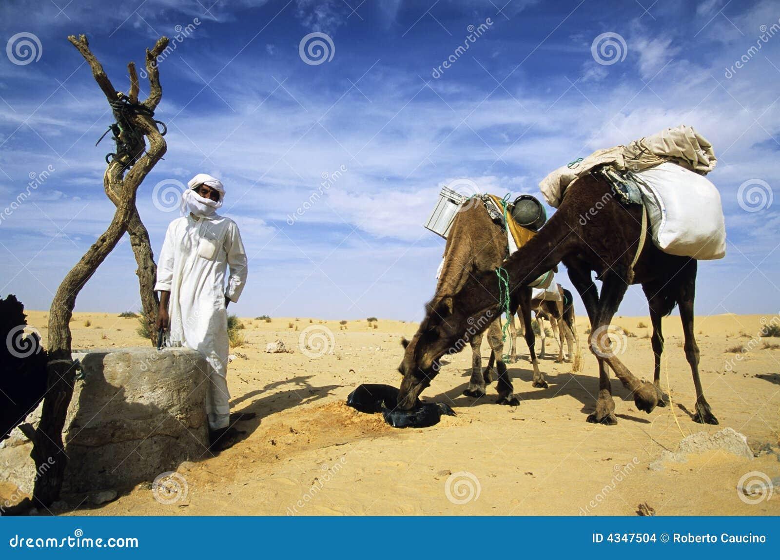 Boire de chameaux