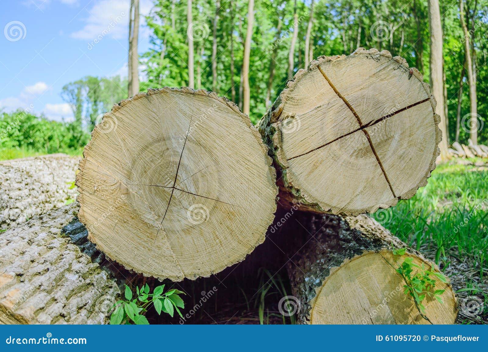 thumbs.dreamstime.com/z/bois-de-construction-abattu-sur-le-secteur-abattu-61095720