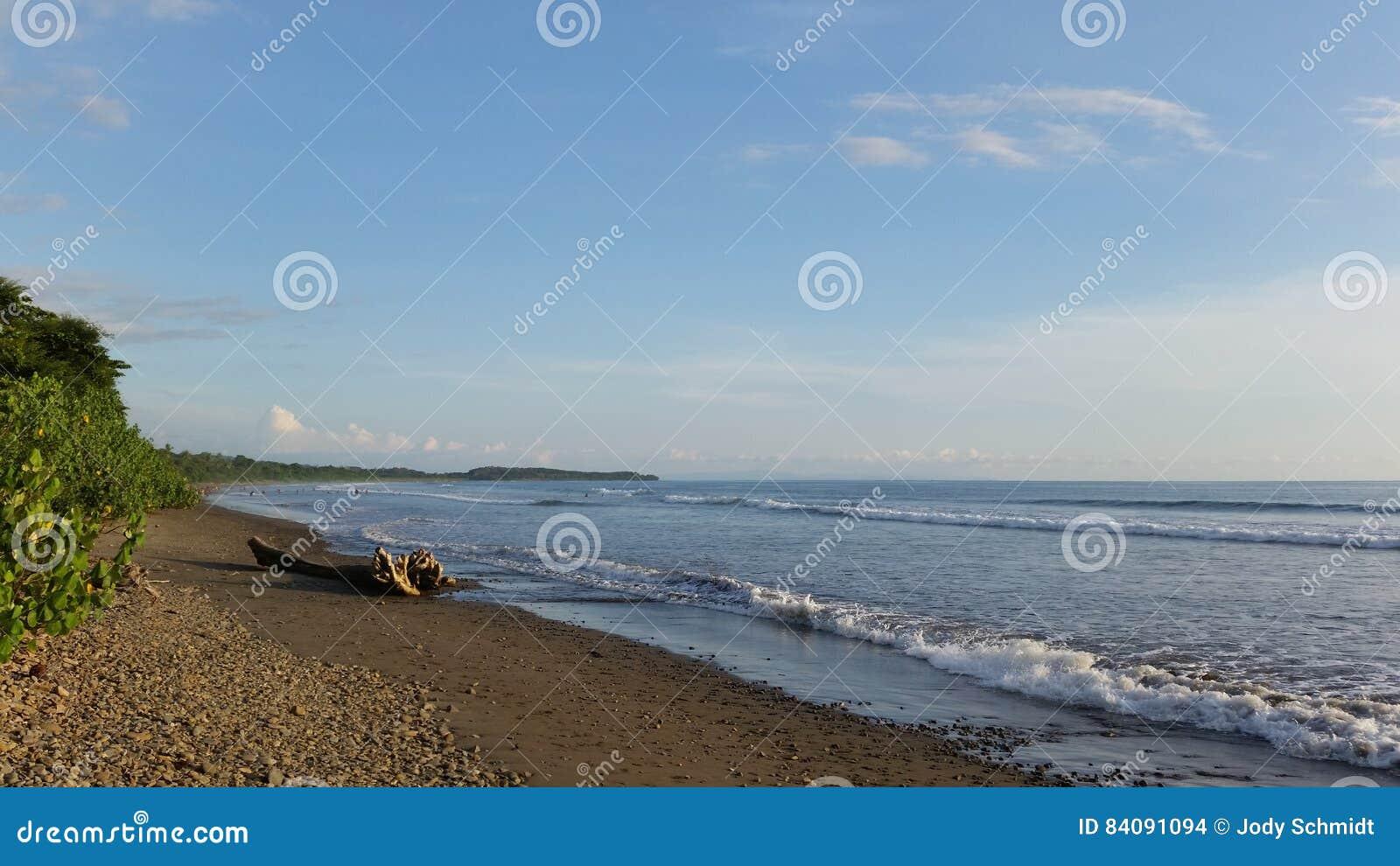 Bois de flottage sur la plage