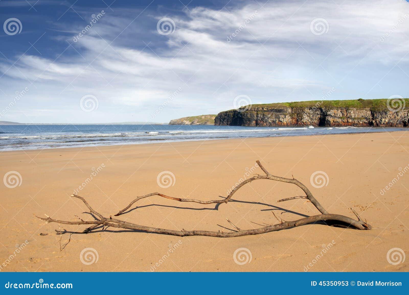 Bois de flottage sur la plage chez Ballybunion