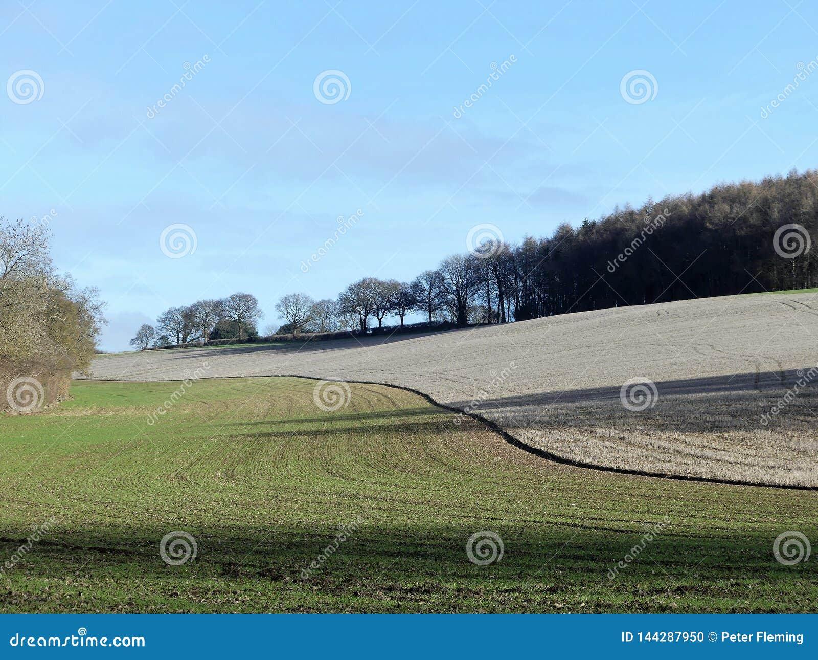 Bois de Scrubbs, Sarratt, Hertfordshire