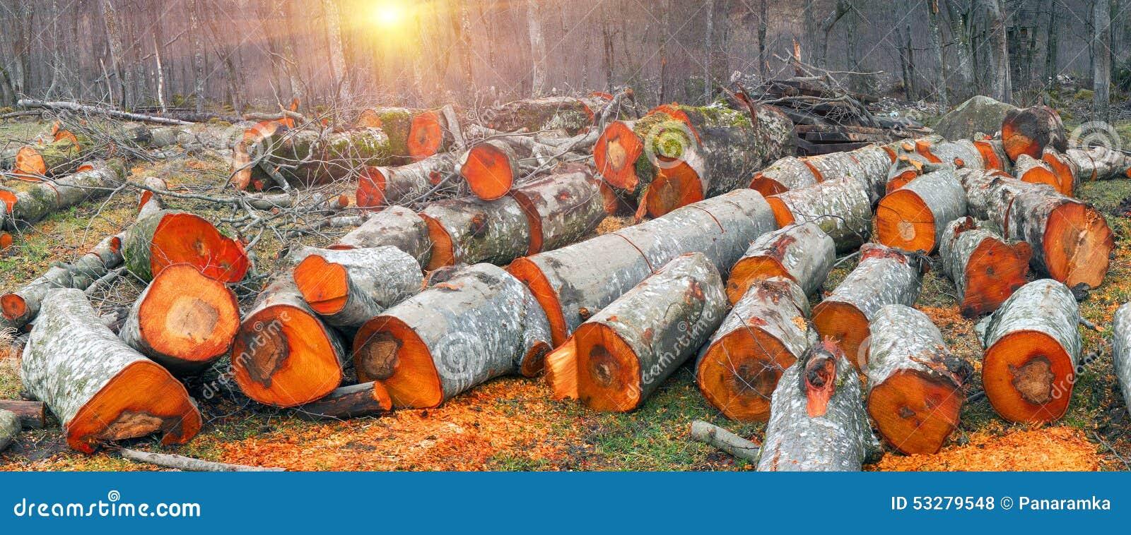 Bois pittoresque d 39 aulne photo stock image 53279548 - Aulne bois de chauffage ...