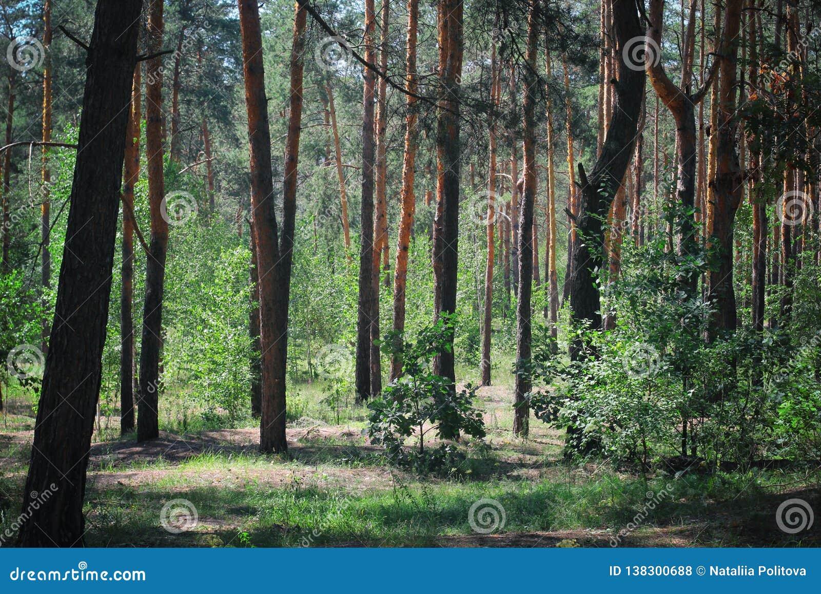 Bois verts photo teintée par forêt verte rampante de forêt verte