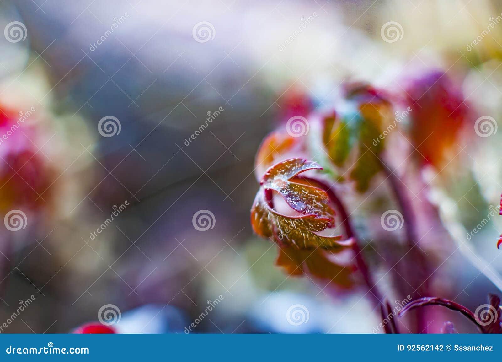 Bokeh con le piante selvatiche
