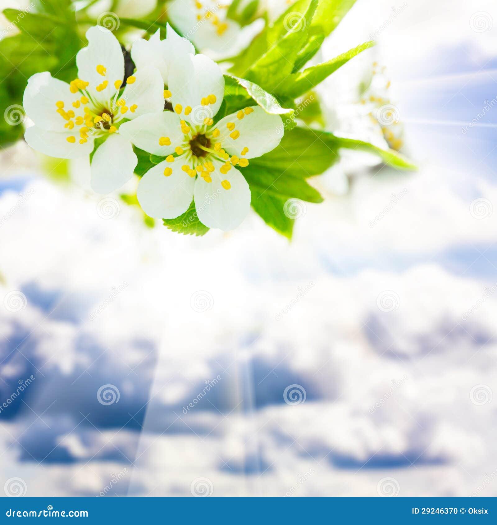 Download Bokeh da mola foto de stock. Imagem de fundo, foco, outdoors - 29246370