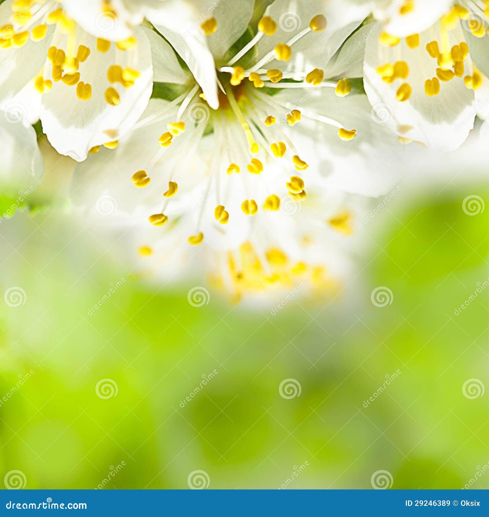 Download Bokeh da mola imagem de stock. Imagem de vida, closeup - 29246389