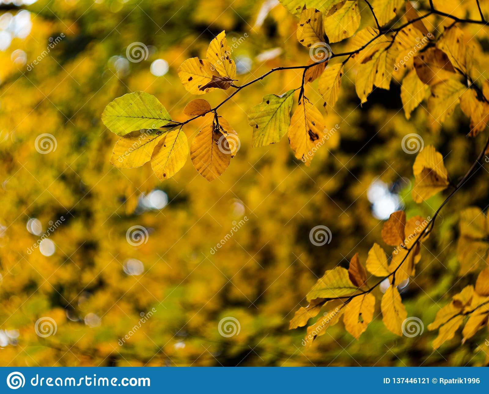 Bokeh de feuilles d automne