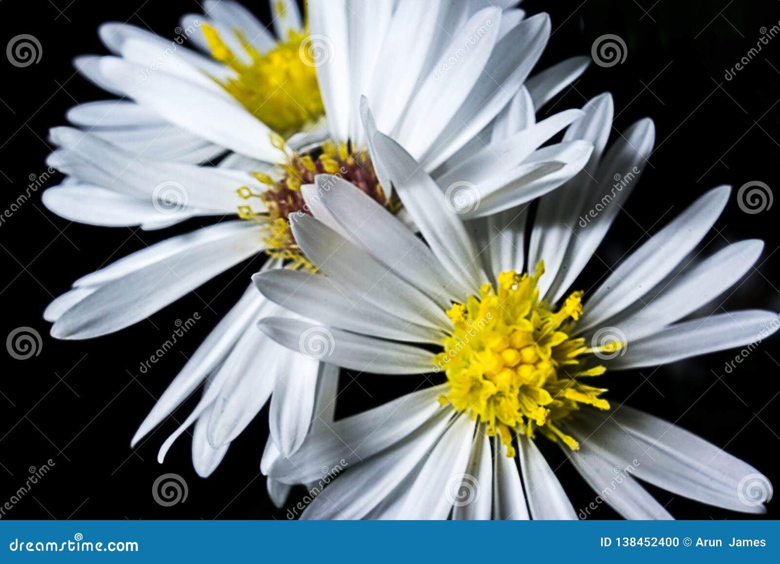 Bokeh kwiaty