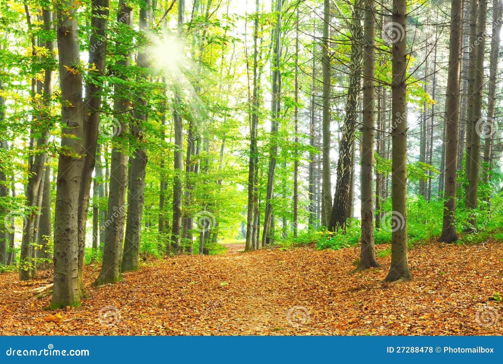 Bokträdskog