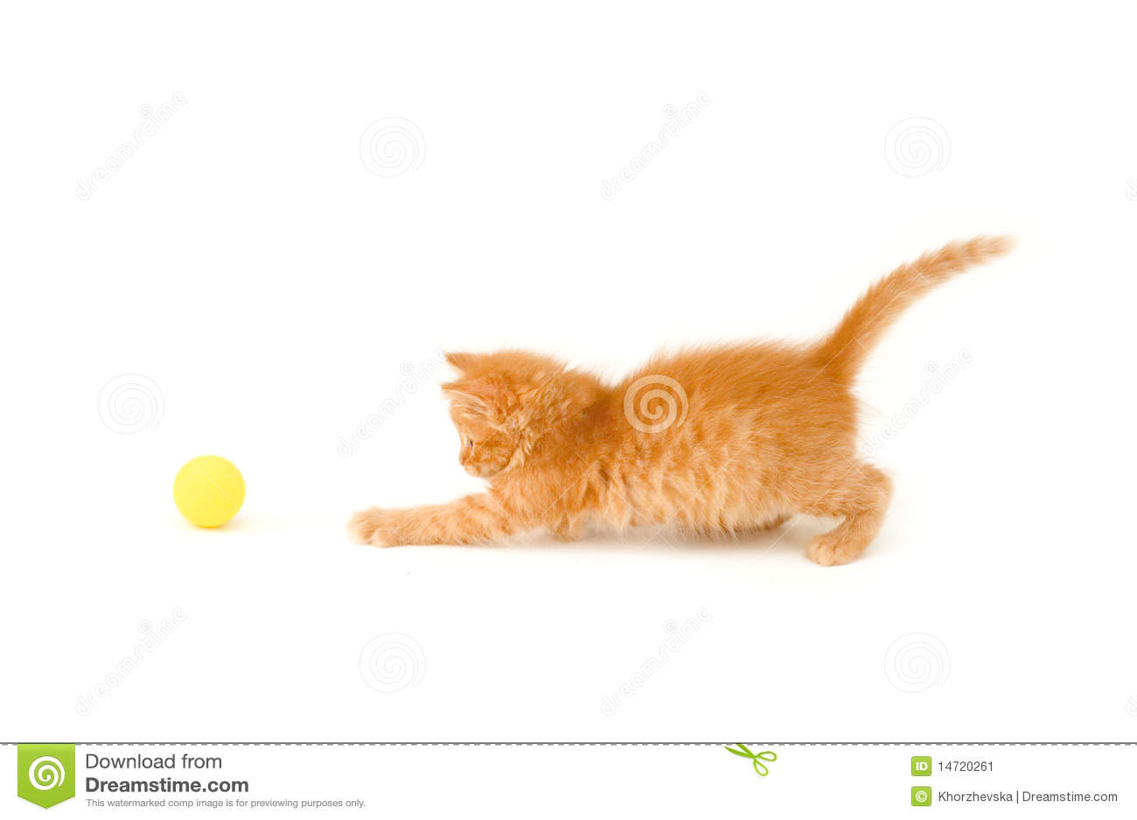 Bola del retén del gatito