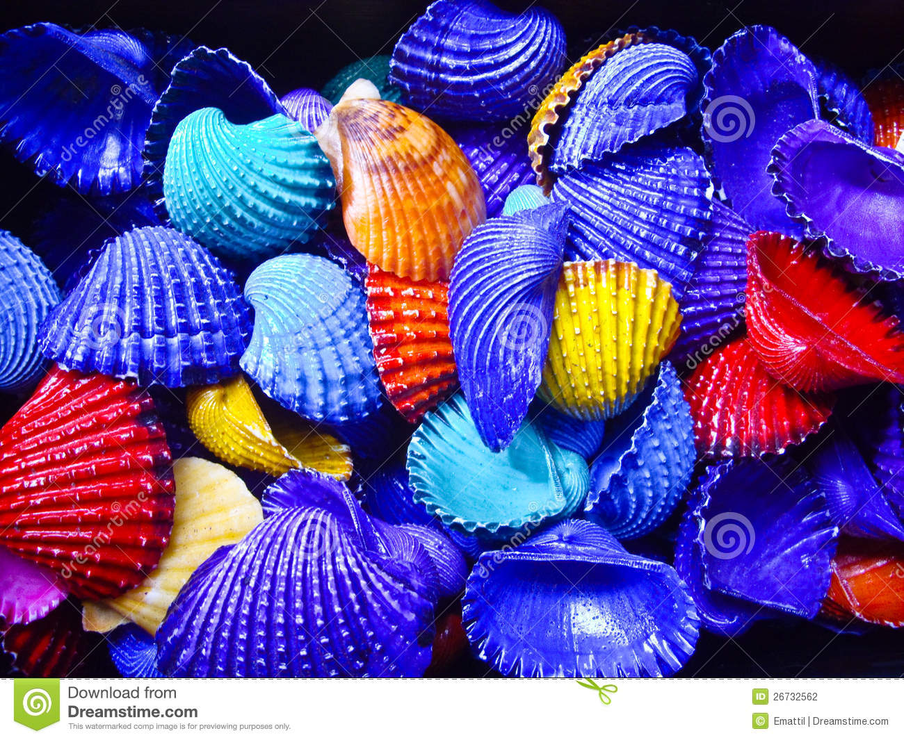 Bold color shells stock photography image 26732562