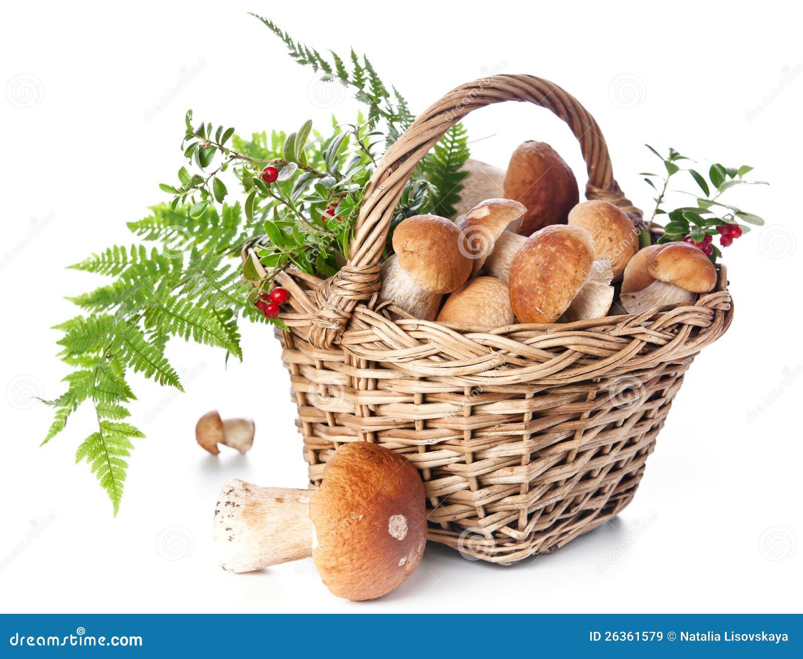 Boletus mushrooms in wicker basket