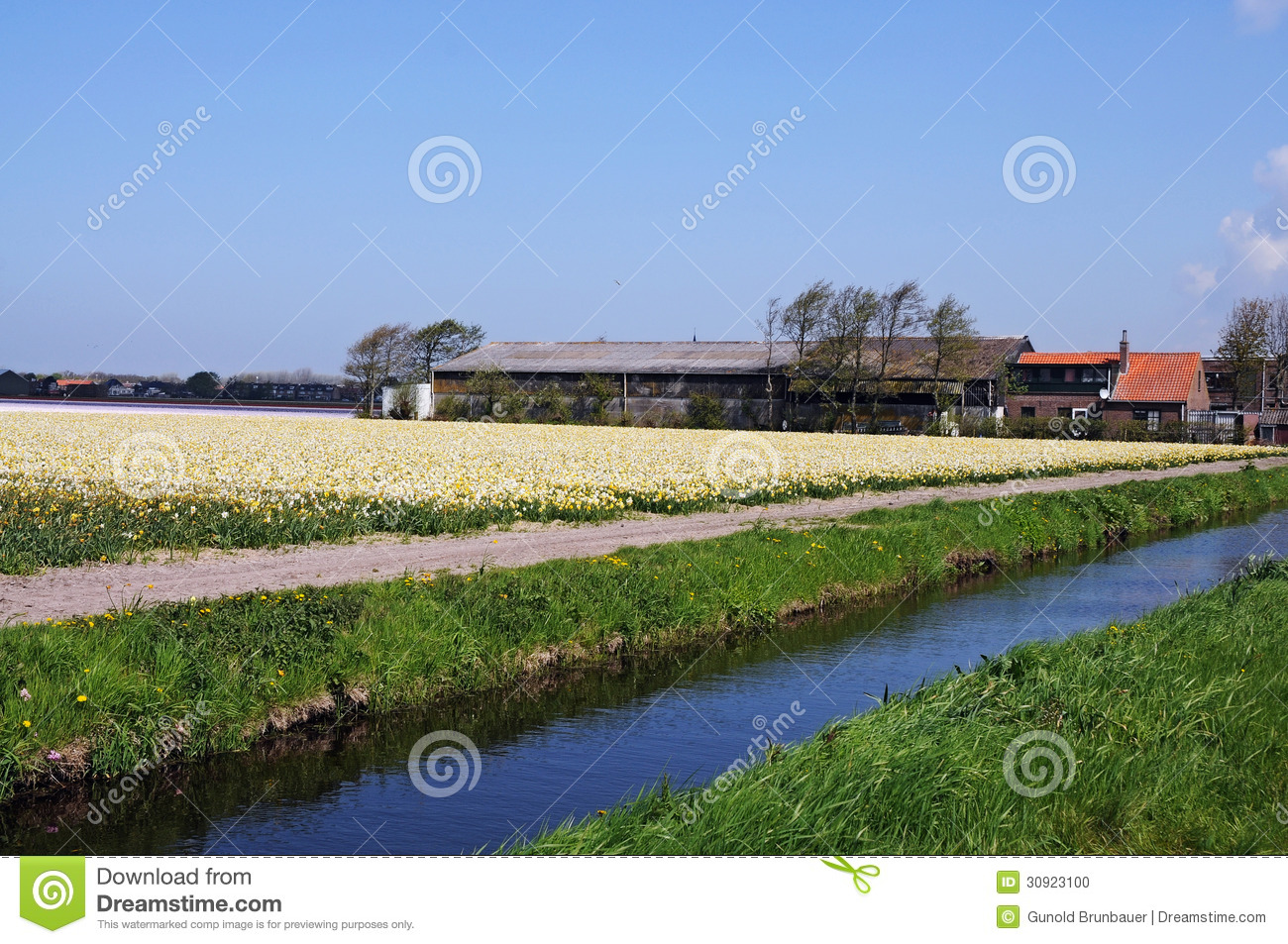 Bollenstreek stock photo image 30923100 for Farm house netherlands