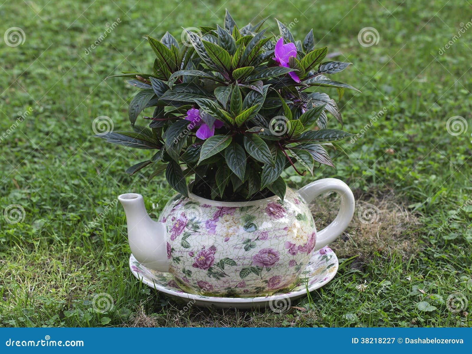 Bollitore dei vasi del giardino con i fiori fotografia for Vasi erba