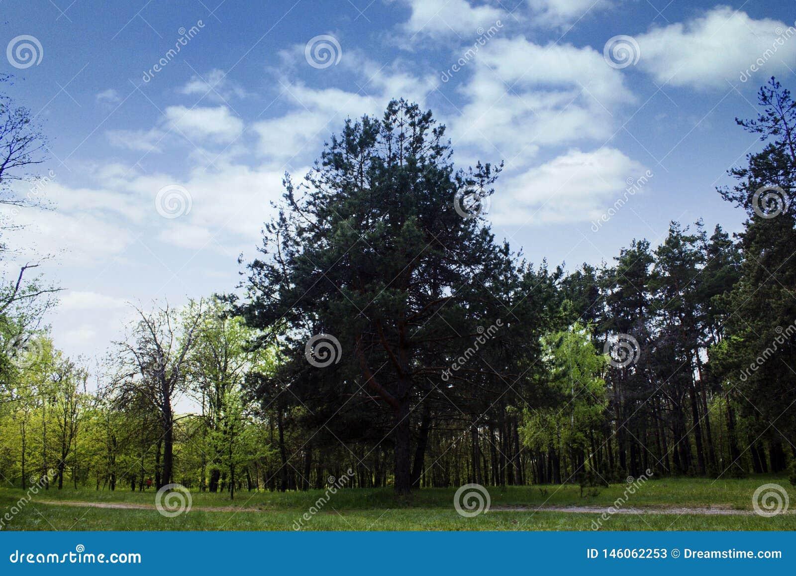 Bomen, aard, landschap, hemel, wolken