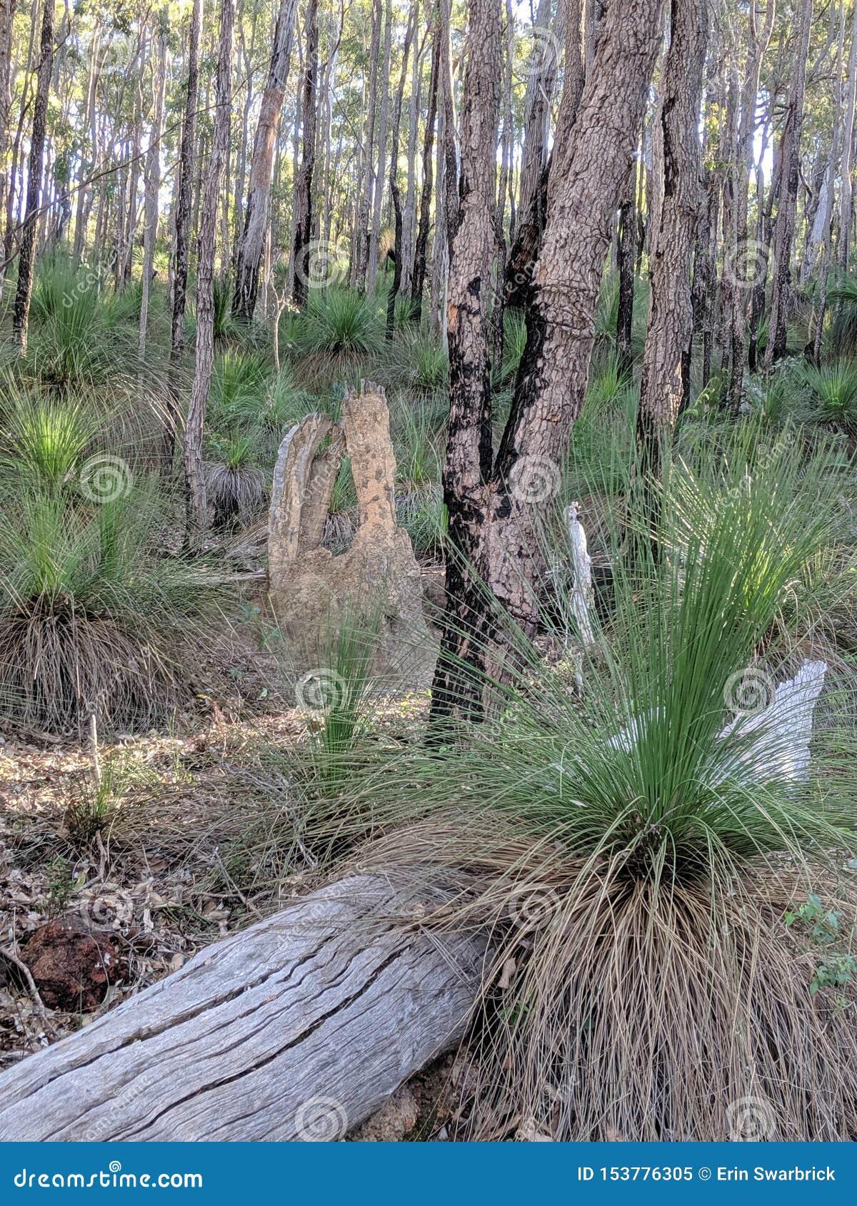 Bomen in Australisch Nationaal Bos