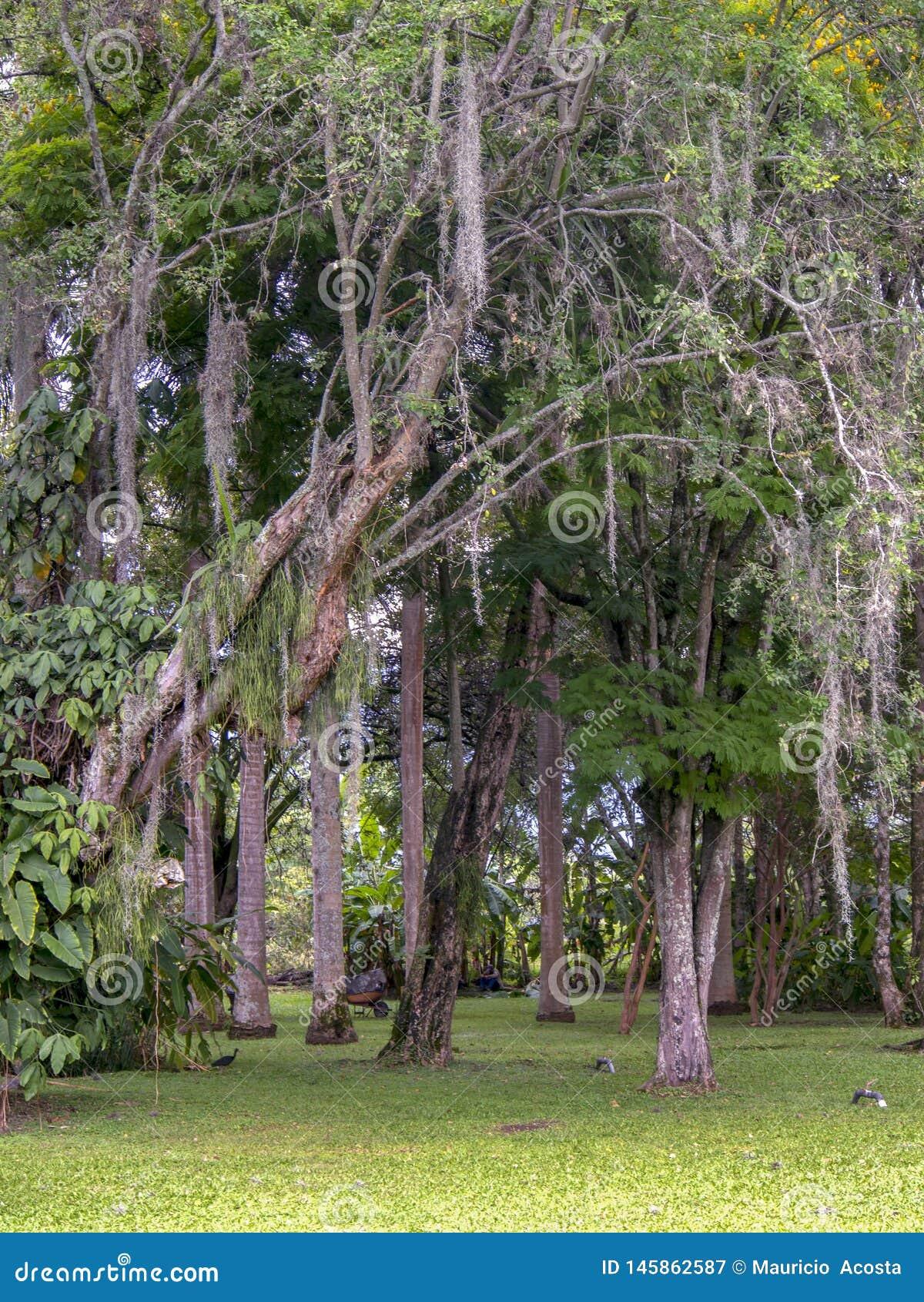 Bomen bij een tropische tuin typisch van het warme klimaat