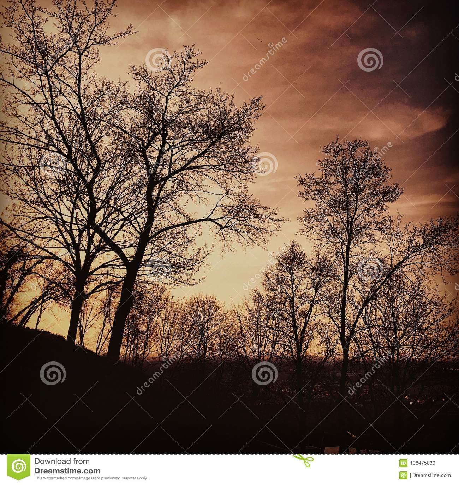 Bomen bij schemer