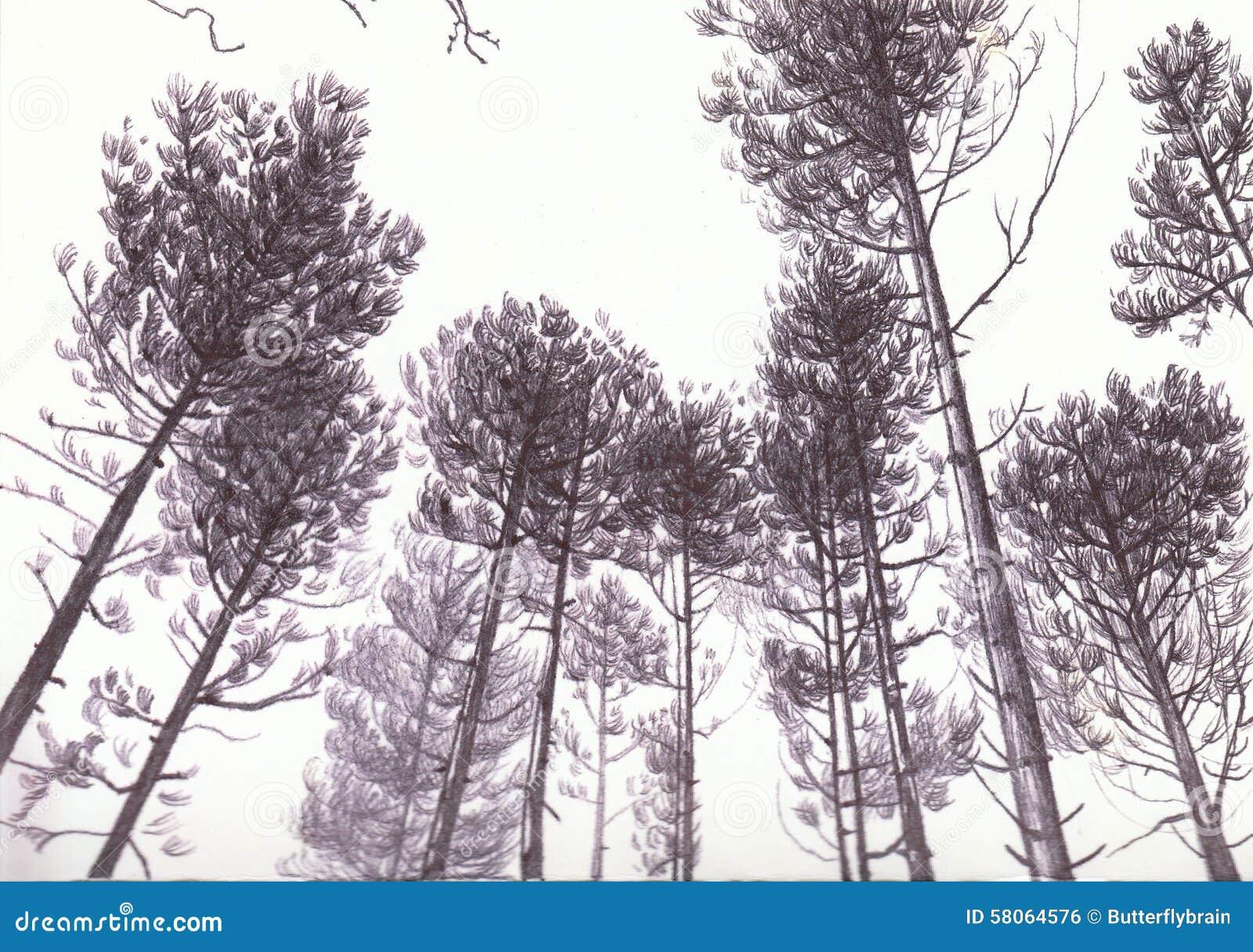 Bomen in Biro