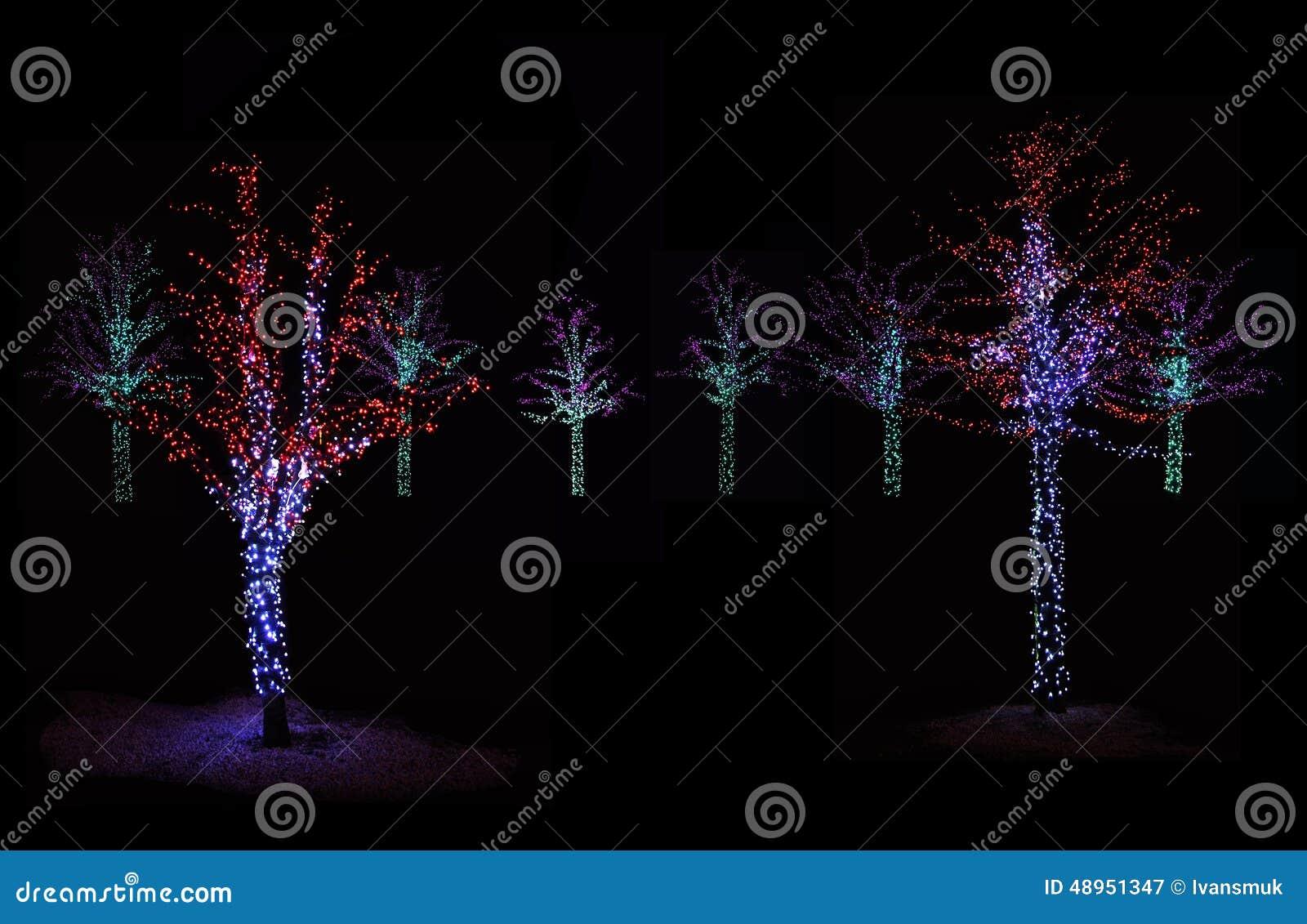 Bomen Die Bij Nacht Worden Verlicht Stock Afbeelding - Afbeelding ...