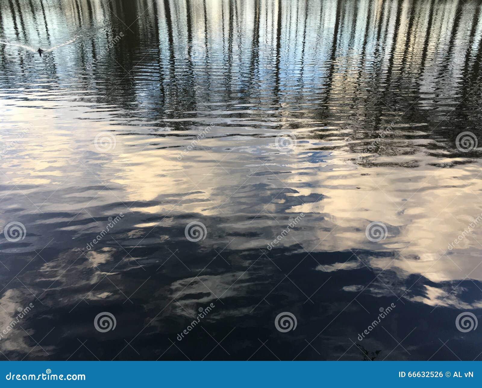 Bomen die in water worden weerspiegeld