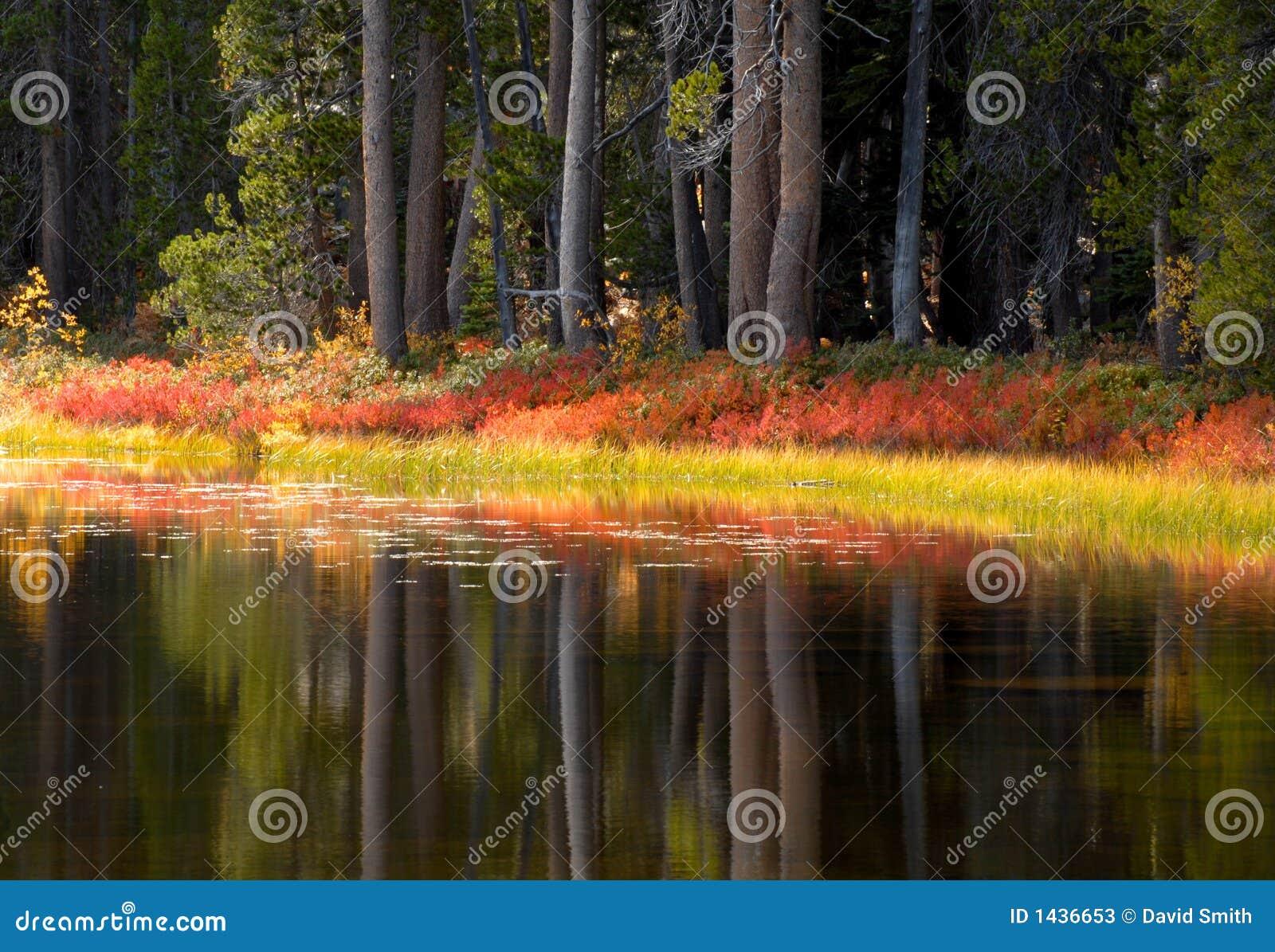 Bomen en gebladerte die op hun dalingskleuren wijzen in een Yosemite p