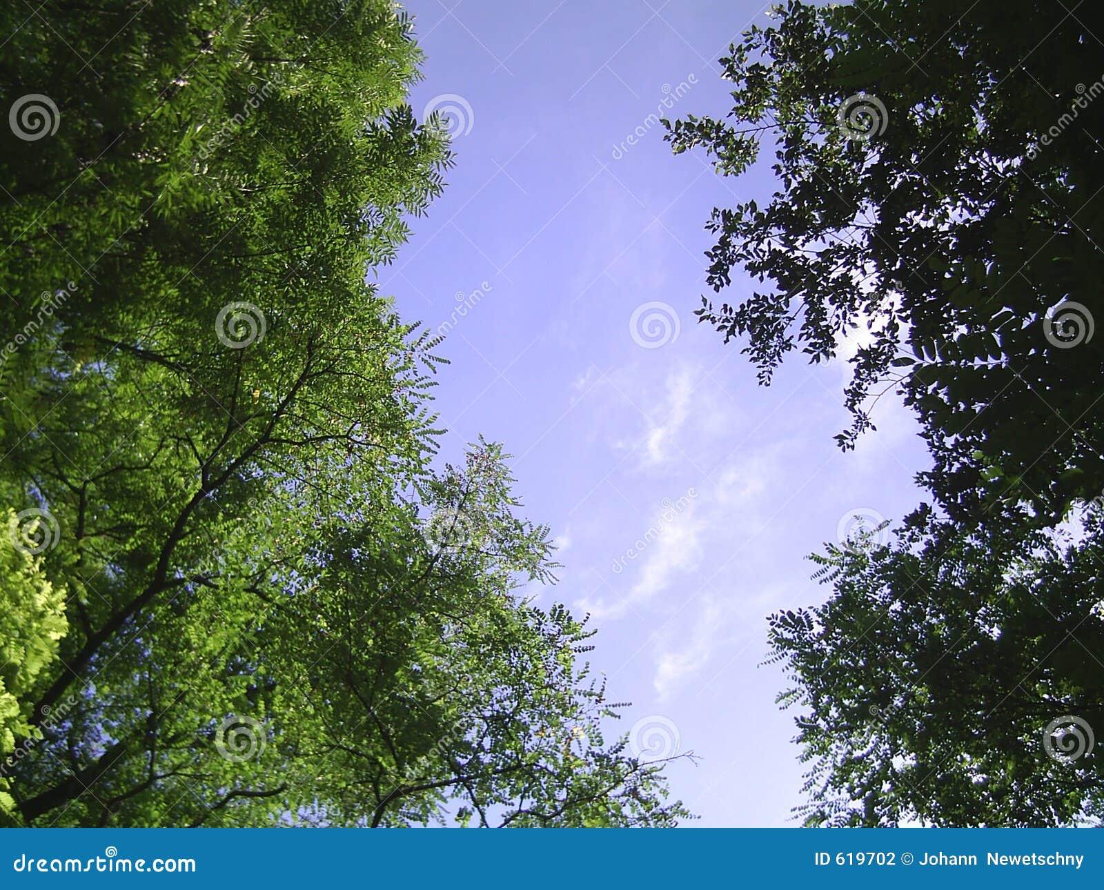 Bomen en hemel