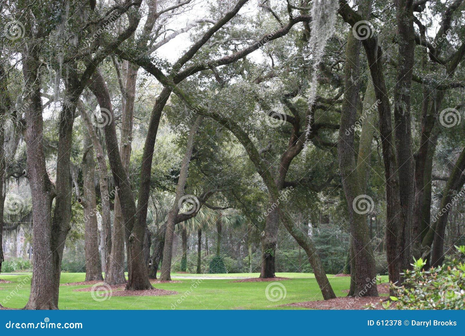 Bomen en Mos
