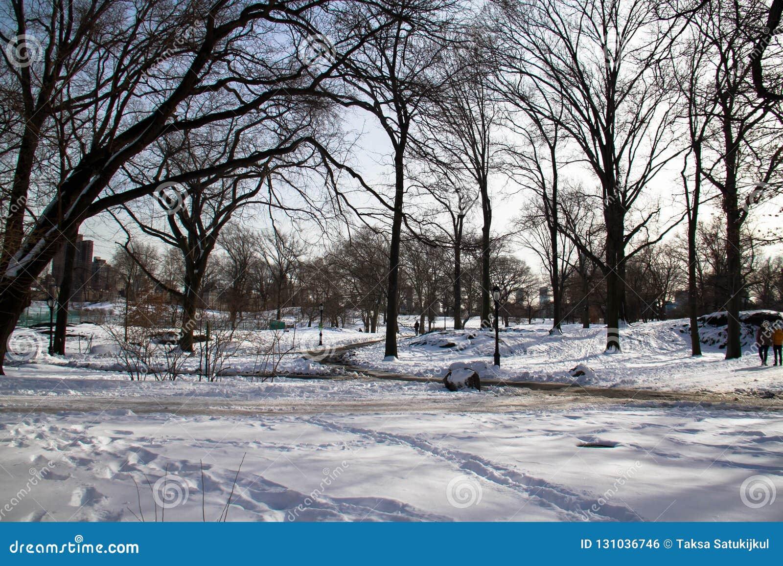 Bomen en voetstappen op sneeuw bij park