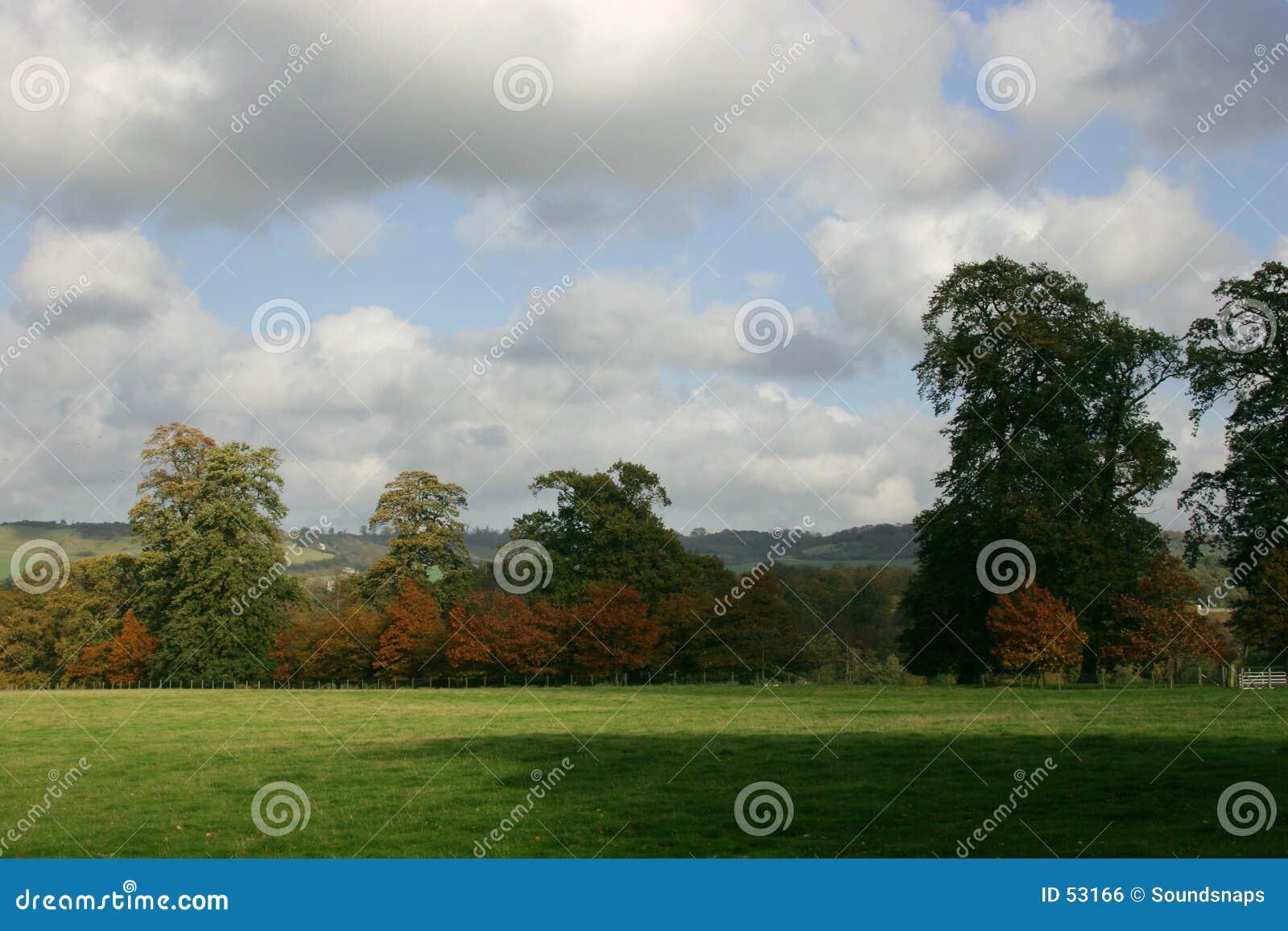Bomen enkel, hemel en gras