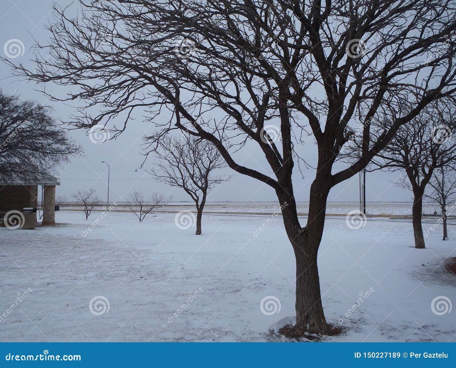Bomen in Gelukkig, de V.S.