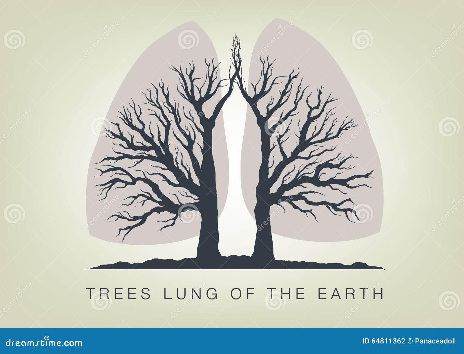 Bomen - longen van de planeet Ecologie in aard