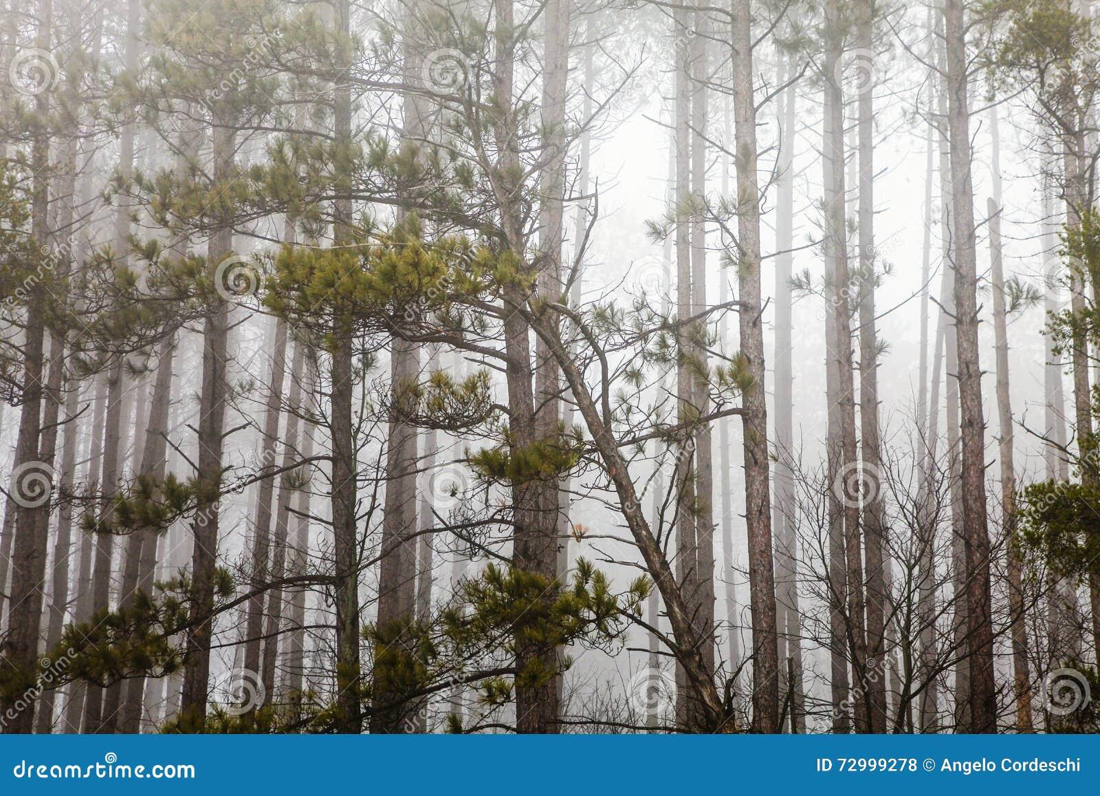 Bomen met mist en mistverschrikkingsaard