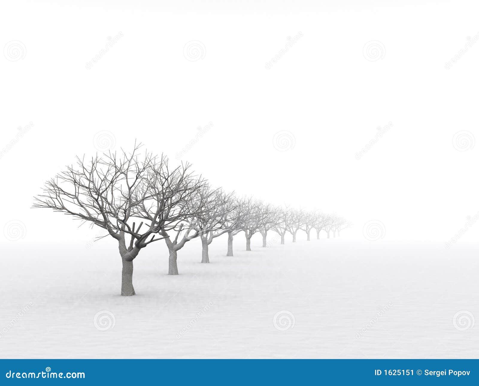 Bomen in nevelige nevel