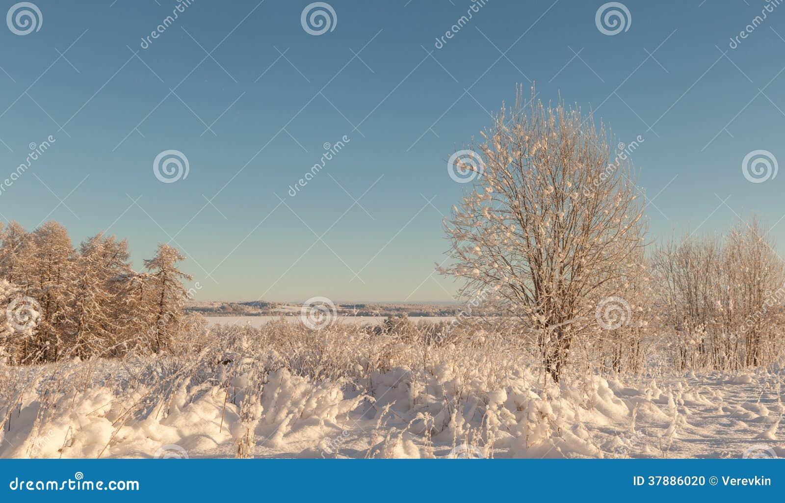 Bomen op het gebied in de winter.