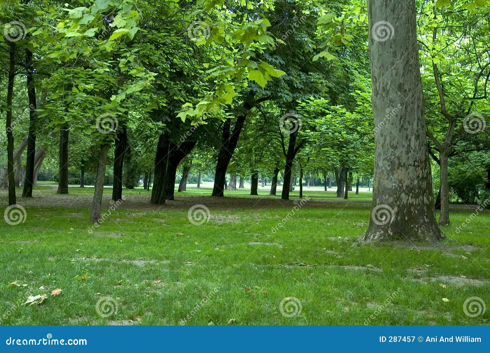 Bomen in park 1