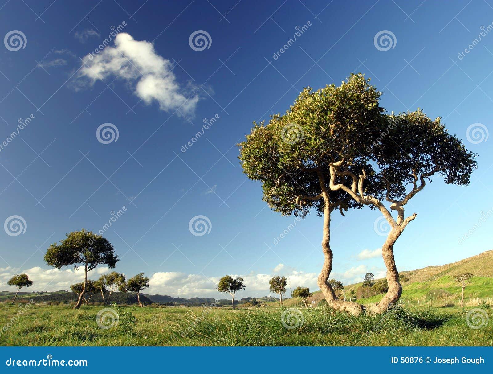 Bomen in Pukekohe