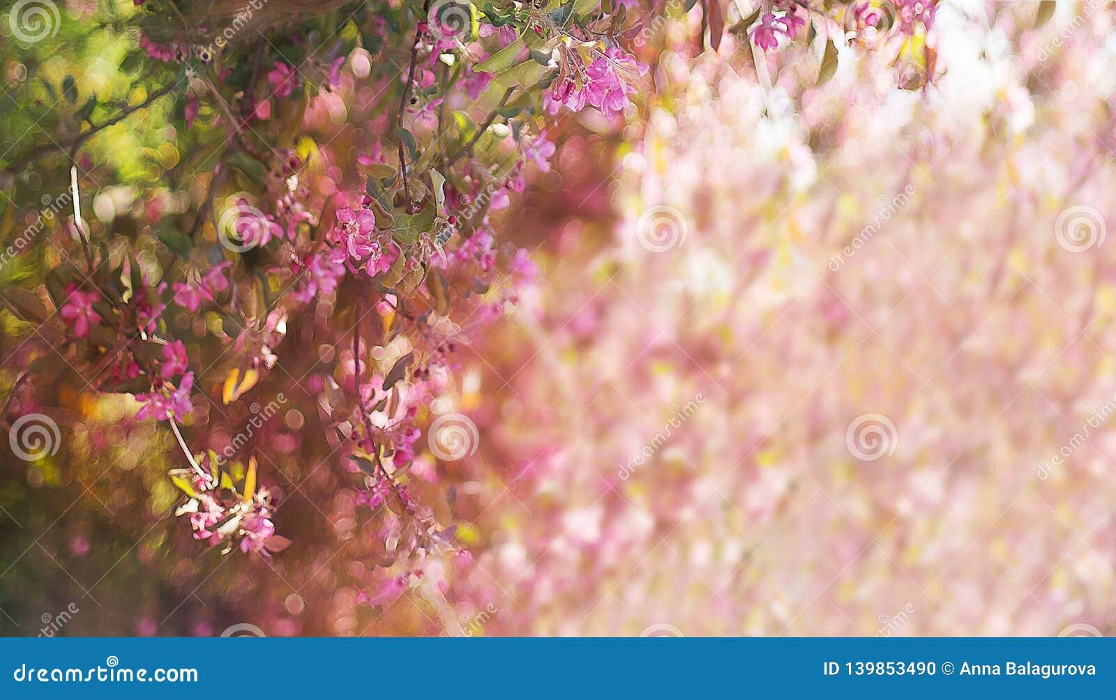 Bomen van de banner de bloeiende roze appel in de lente