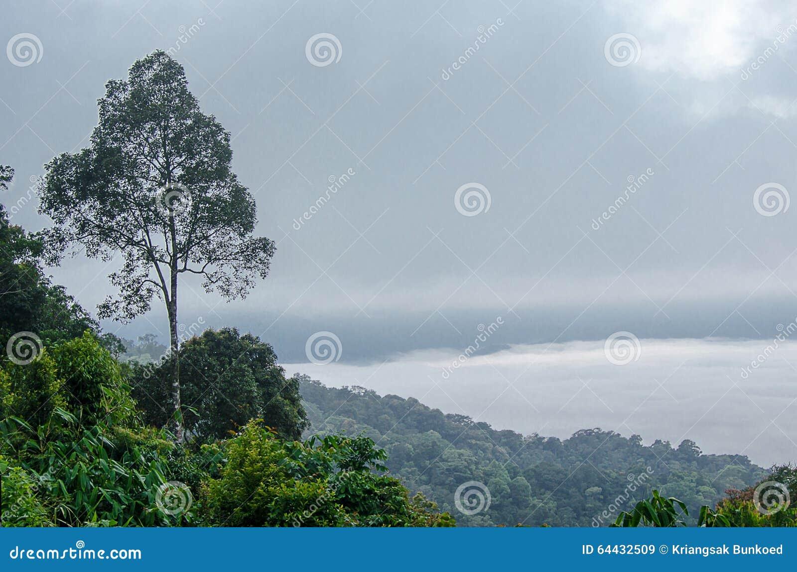 Bomenlandschap op de berg De achtergrond van het onduidelijke beeld